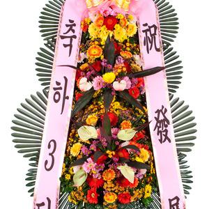 축하3단 기본3